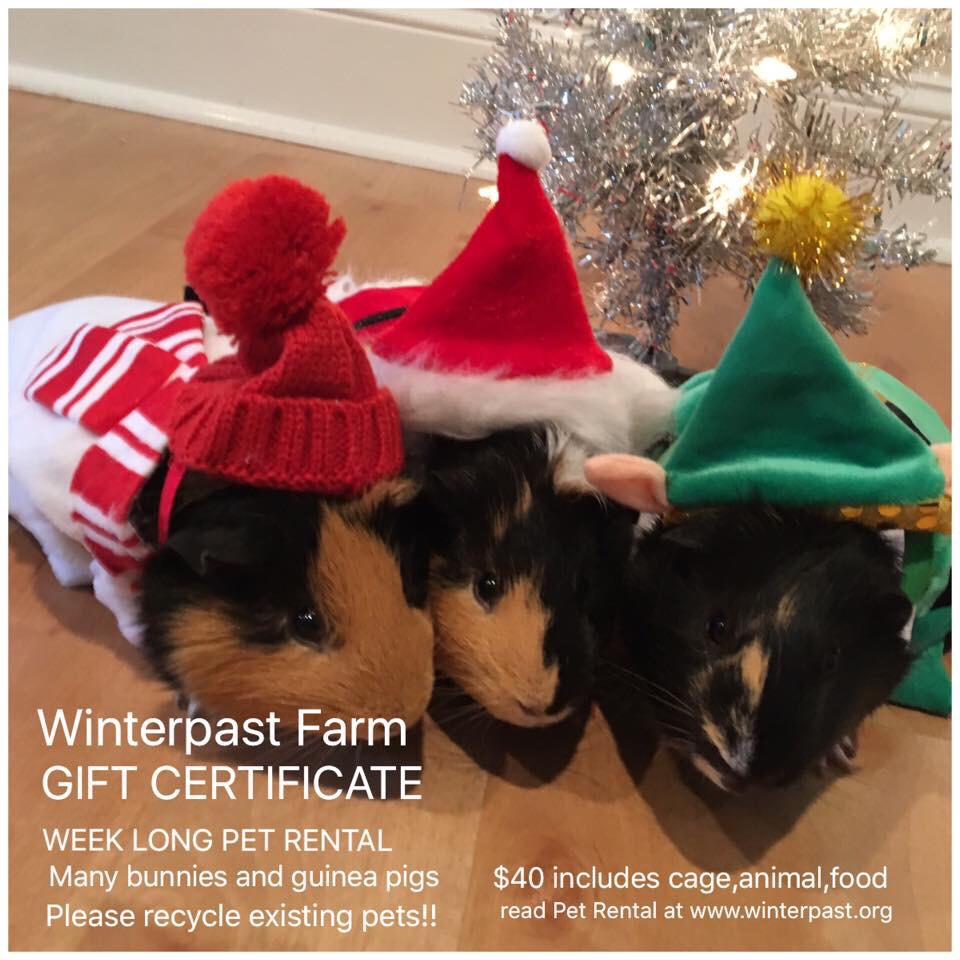 RENT A PET FOR CHRISTMAS GIFT! | Winterpast Farm